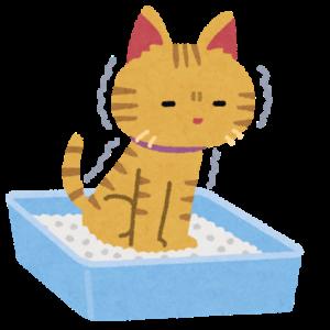 猫のトイレのしつけ方