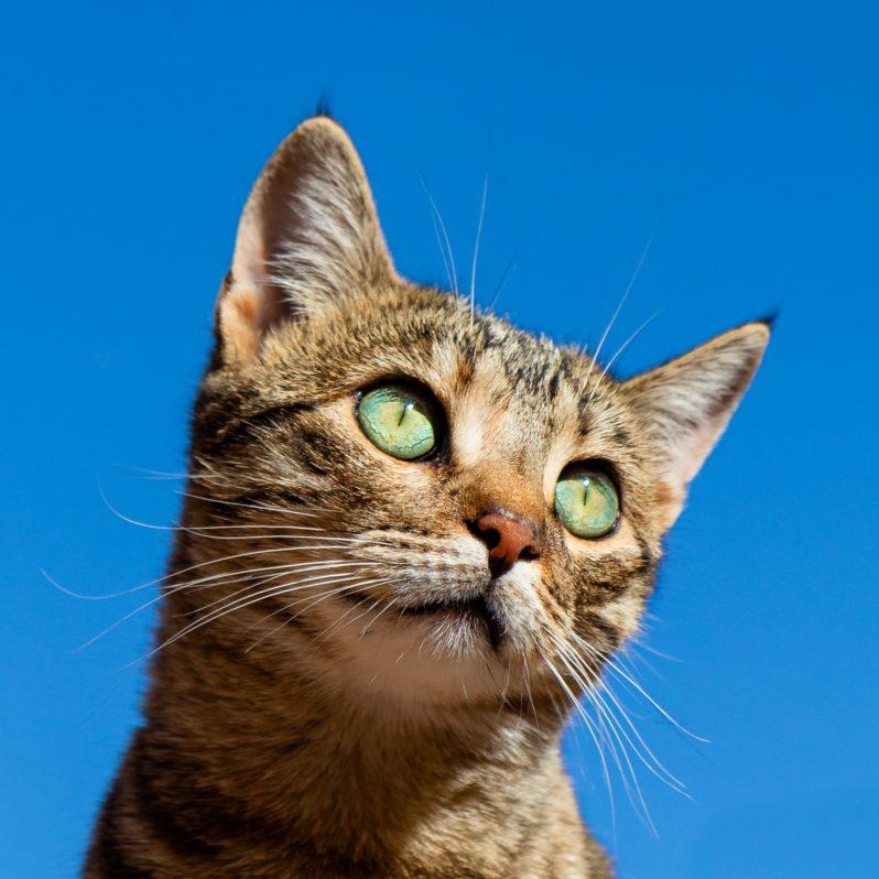 猫の目やにの除去方法